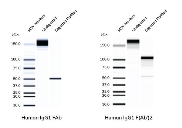 Antibody_Solutions_Gel-F2-2