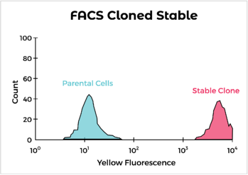 FACS Cloned Stable
