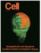 Immunocytochemistry-image-b