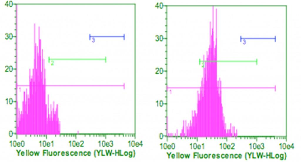 Yellow_Fluorescence