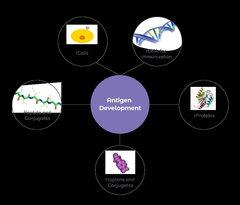 AS_Solutions_By_Service_Antigen_Dev_main