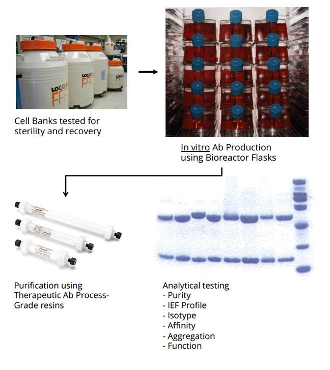 monoclonal manufacture