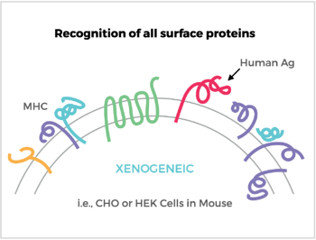 Recognition of all surface proteins