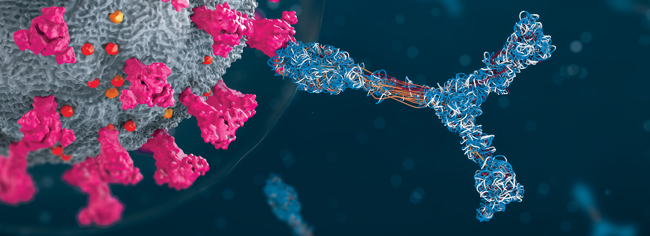 Functional Assays: Narrowing the Field from Binders to Therapeutic Candidates